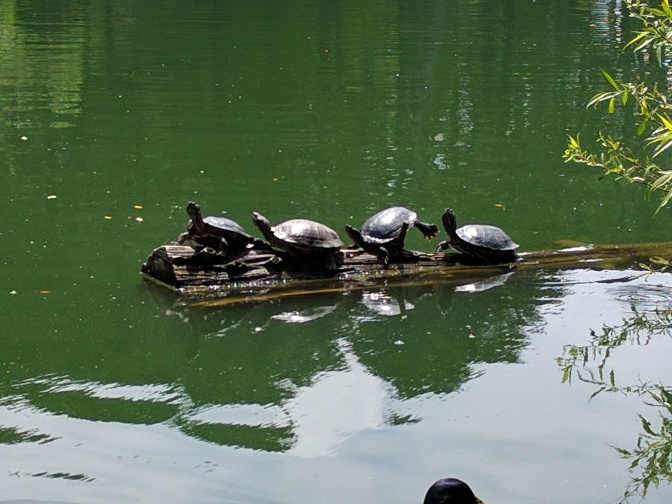 I Want To Be These Sunbathing Turtles